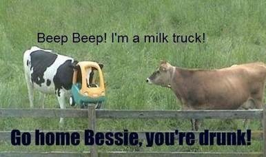 Beep beep im milk truck go home bessie you're drunk Cow Memes