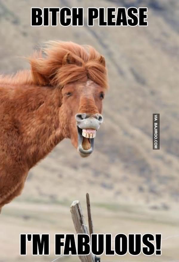 Bitch please I'm fabulous Horse Meme