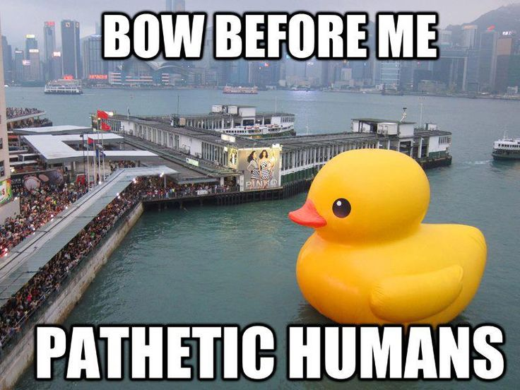 Bow before me pathetic humans Duck Memes