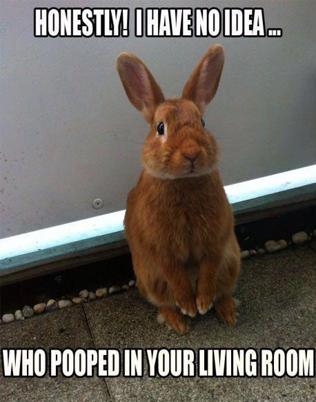 Bunnies Meme Honestly i have no idea who pooped in your living room