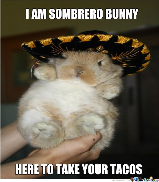 Bunnies Meme I am sombrero bunny here to take your tacos