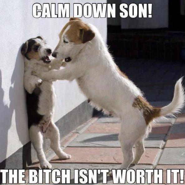 Calm down son the bitch isn't Dog Memes