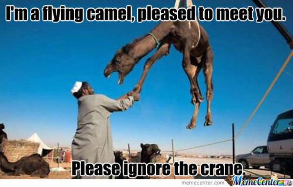 Camel Meme I'm a flying camel pleased to meet you