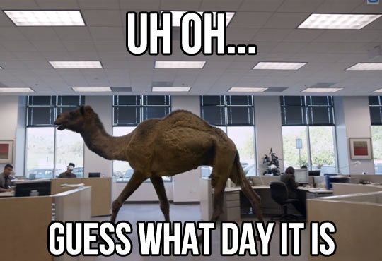 Camel Meme uh oh guess what day it is (2)