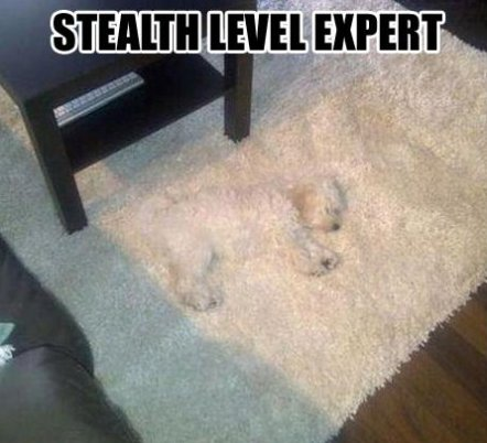 Camouflage Memes Stealth level expert