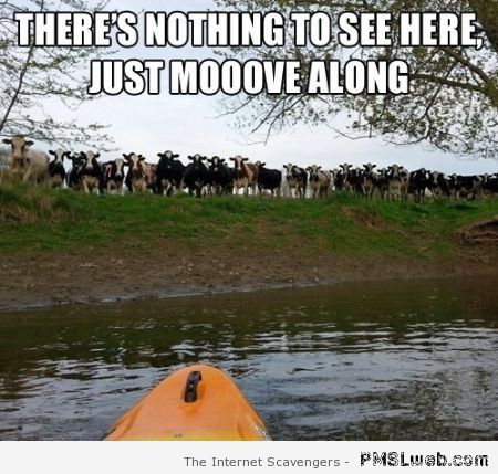 Cow Meme There's nothing to see here just move alone