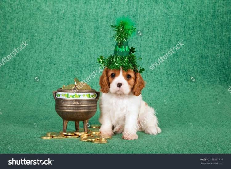 Cute Puppy Wishes Happy St. Patrick's Day