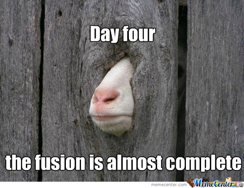 Day four the fusion is almost complete Goat Meme