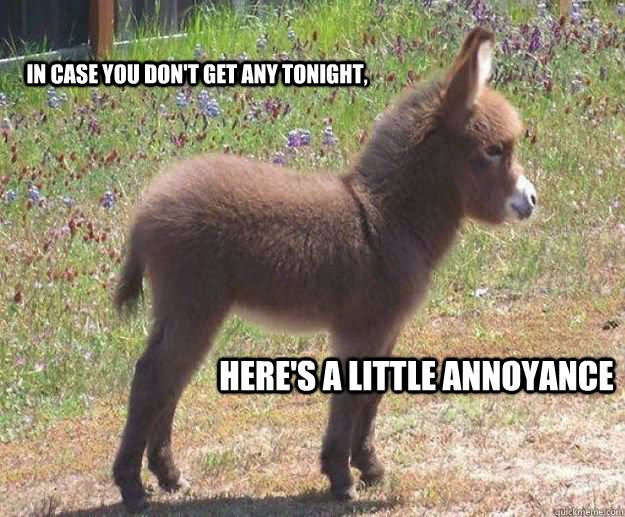 Donkey Meme in case you don't get any tonight