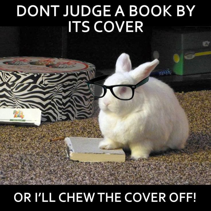 Don't judge a book by its cover Bunnies Meme