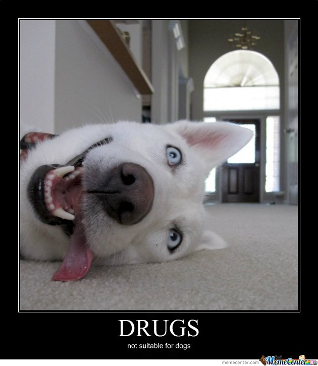 Drugs Meme Drugs not suitable for dogs