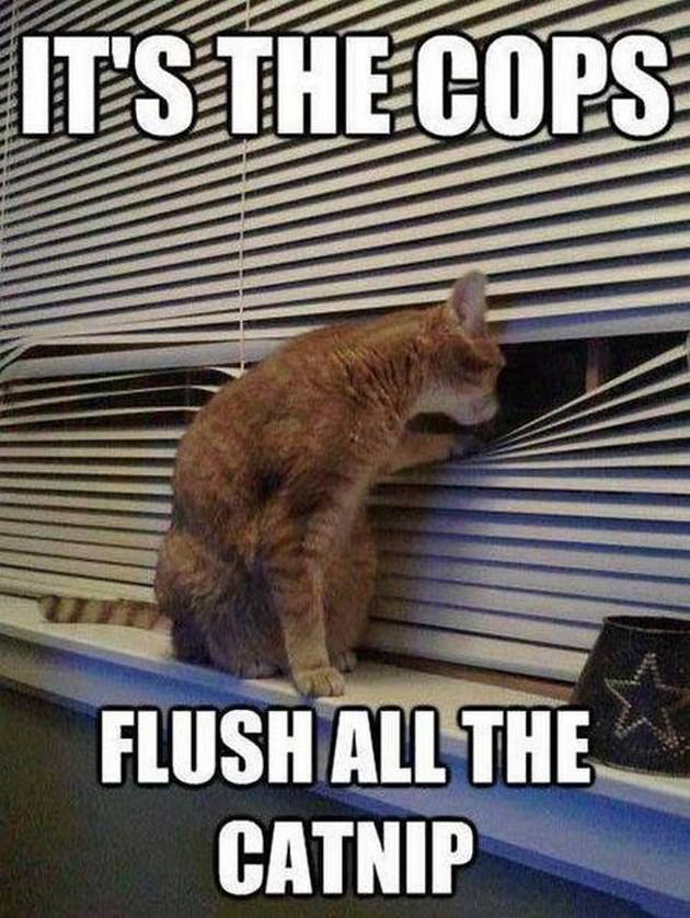 Drugs Meme Its the cops flush all the catnip