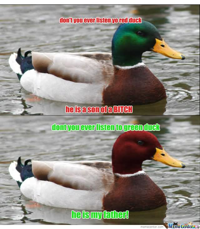 Duck Meme Don't you ever listen yo red duck
