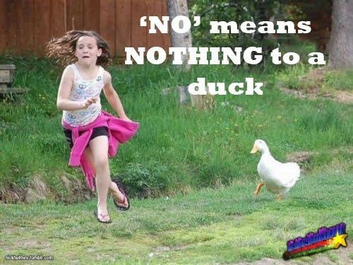 Duck Memes No means nothing to a duck
