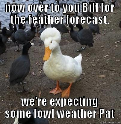 Duck Memes now over to you bill for feather forecast