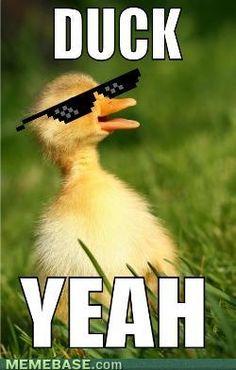Duck yeah Duck Memes