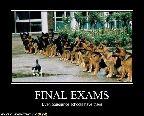 Exam Meme final exams even obedience schools have them