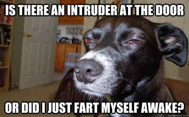 Fart Memes Is there an intruder at the door or did i just fart
