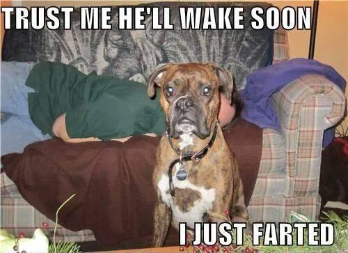 Fart Memes Trust me he'll wake soom i just farted
