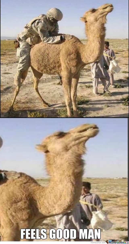 Feels good man Camel Meme