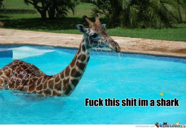 Fuck this shit im a shark Giraffe Meme