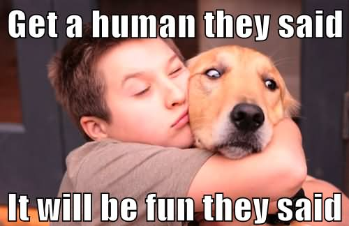 Get a human they said it will be fun Dog Meme