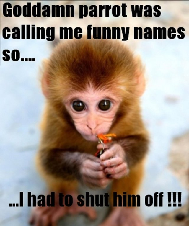 Goddamn parrot was calling me funny names so Monkey Memes