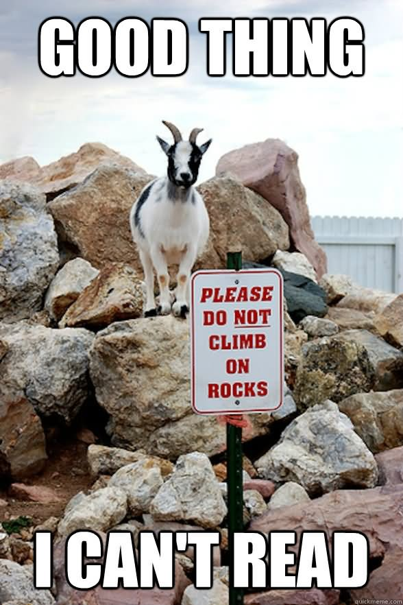 Good Thing Please do not climb on rocks i can't read Goat Memes