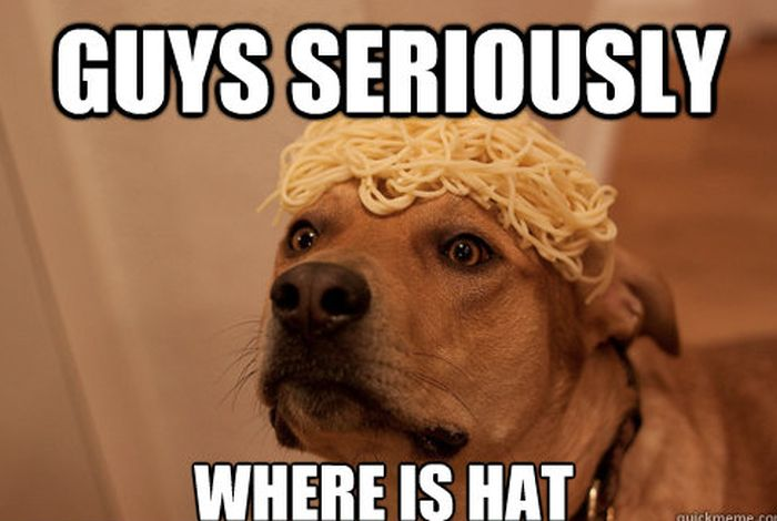 Guys seriously where is hat Dog Memes