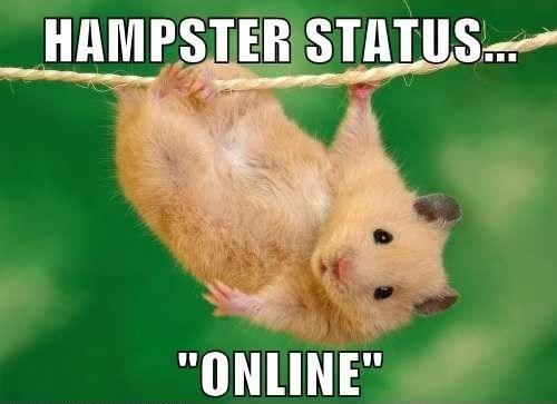 Hamster status online Hamster Meme