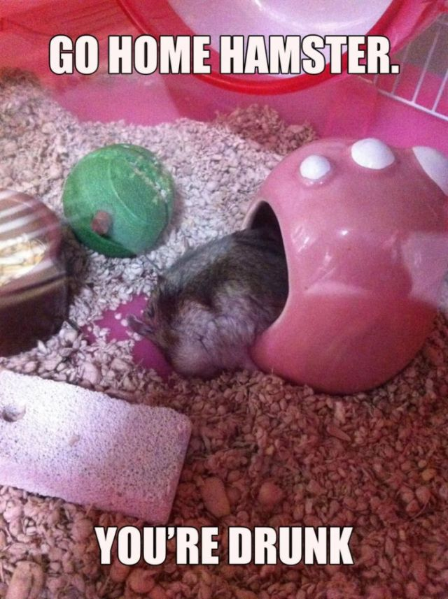 Hamster Memes Go home hamster you're drunk