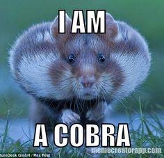 Hamster Meme I am a cobra