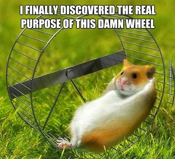 Hamster Meme I finally discovered the real purpose