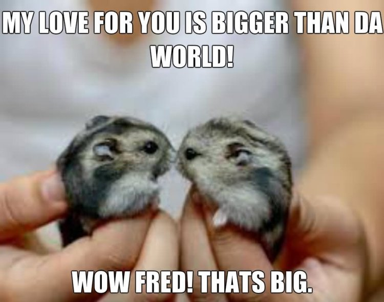 Hamster Memes My love for you is bigger than da world