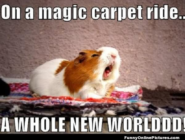 Hamster Memes On a magic carpet ride a whole new worlddddd