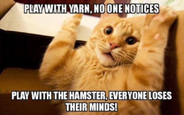 Hamster Memes Play with yarn no one notices play with the hamster everyone