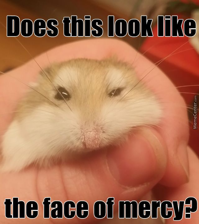 Hamster Memes does this look like the face of mercy