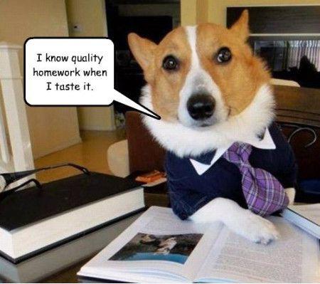 Homework Meme i know quality homework when i taste it