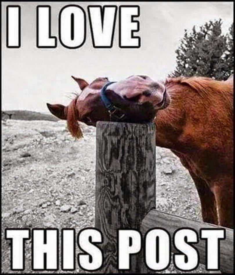 Horse Meme I love this post