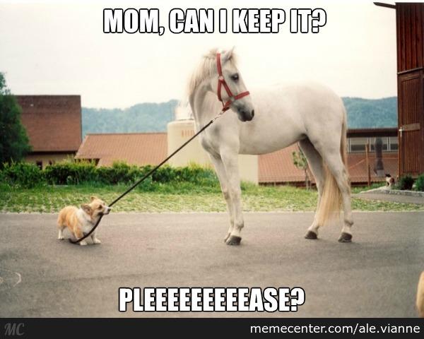 Horse Meme Mom can i keepit pleeeeeeease