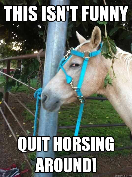 Horse Meme This isn't funny quit horsing around