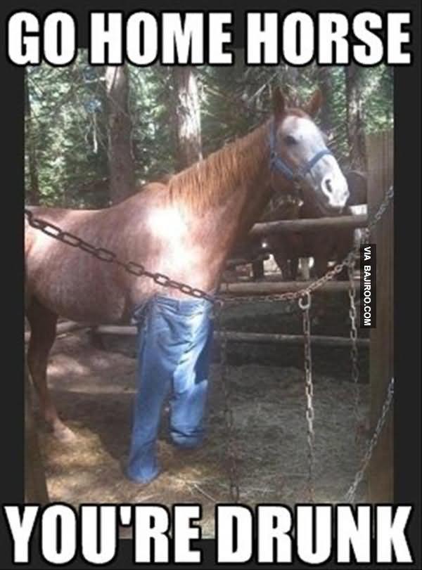 Horse Meme go home horse you're drunk