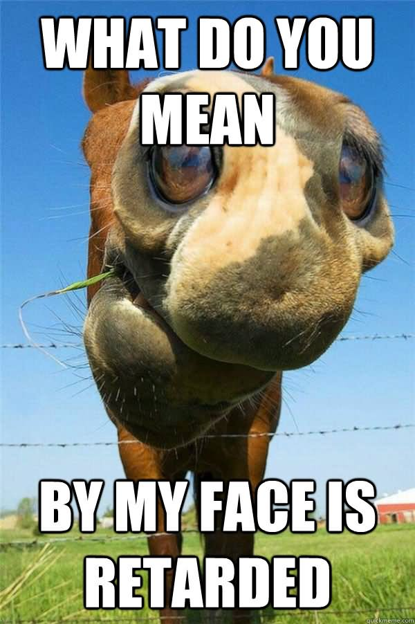 Horse Memes What do you mean by my face