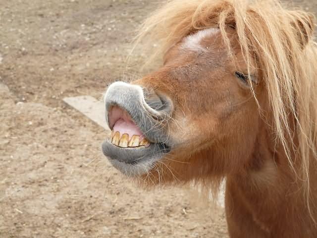 Horse Memes funny