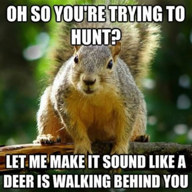 Hunting Meme Oh so you're trying to hunt let me
