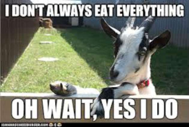 I don't always eat everything on wait Goat Memes