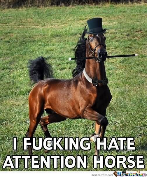I fucking hate attention horse Memes