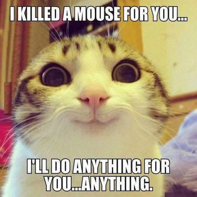 I killed a mouse for you i'll do anything for you anything Laugh Meme