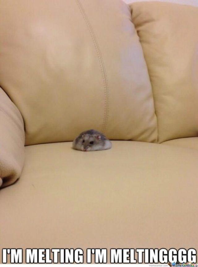 I'm melting I'm meltingggg Hamster Meme