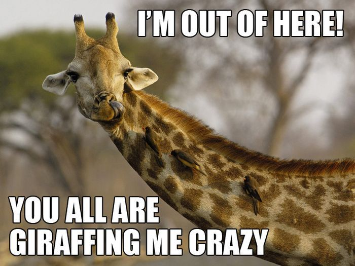 Funny I M Here Meme : Im out of here you all are giraffe meme picsmine